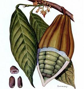 cacao voordelen